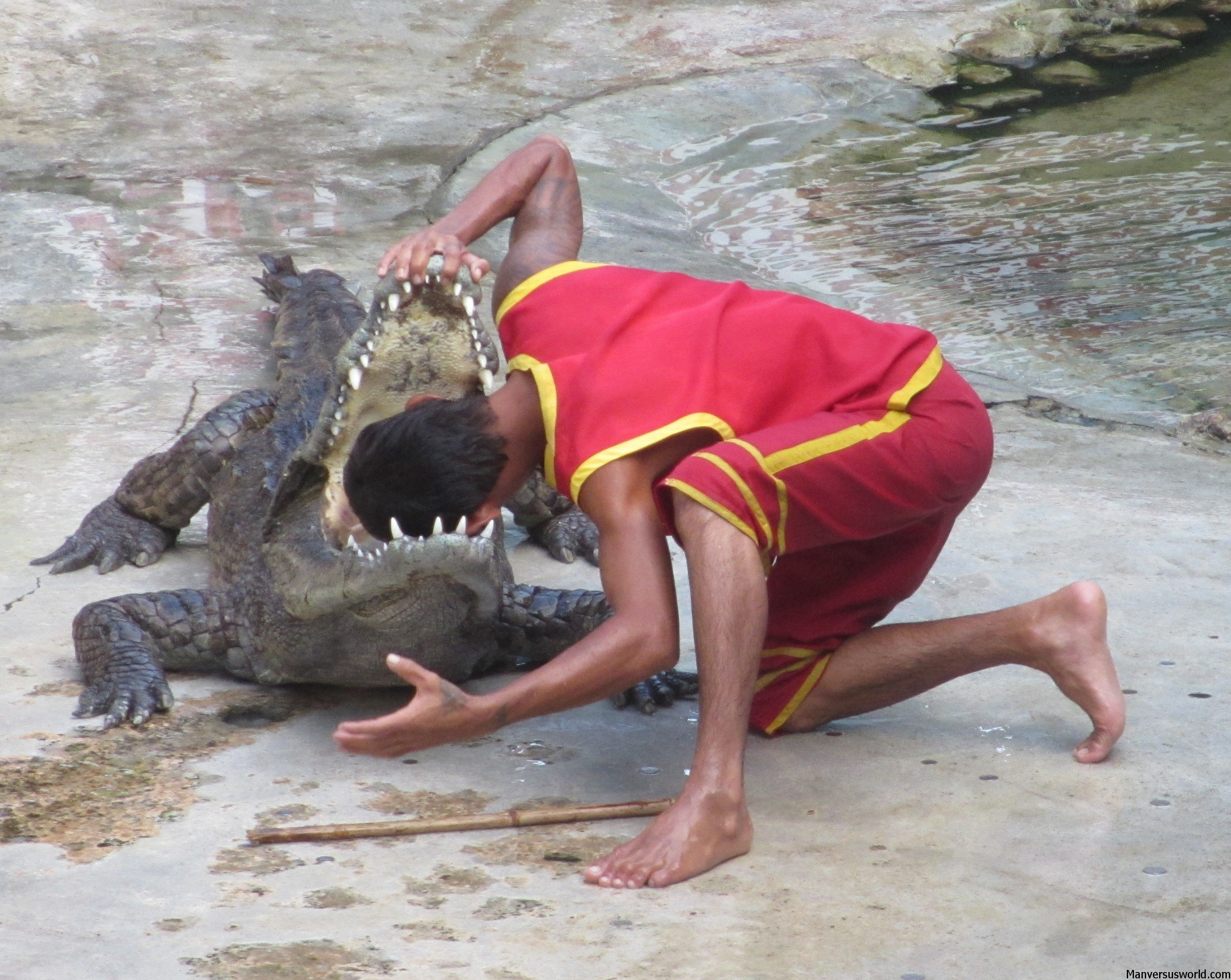 A man puts his head inside a croc's gaping mouth.