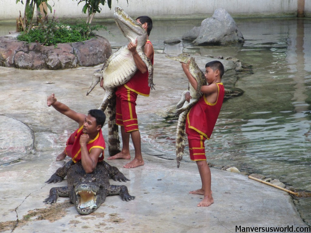 Crocodile wrestling at Samutprakarn, Bangkok