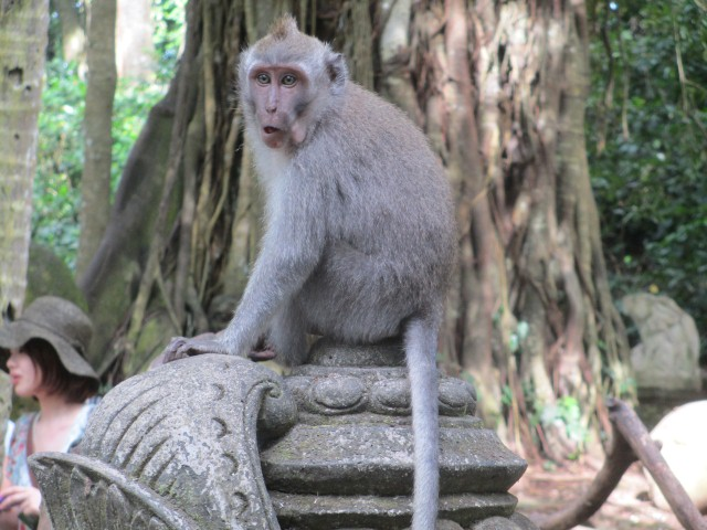 A cheeky monkey in Ubud's Monkey Forest