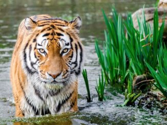 Animal Adventures: The Best Places To Travel For Incredible Wildlife