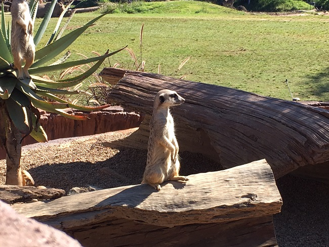5 surprising things about Australia Zoo