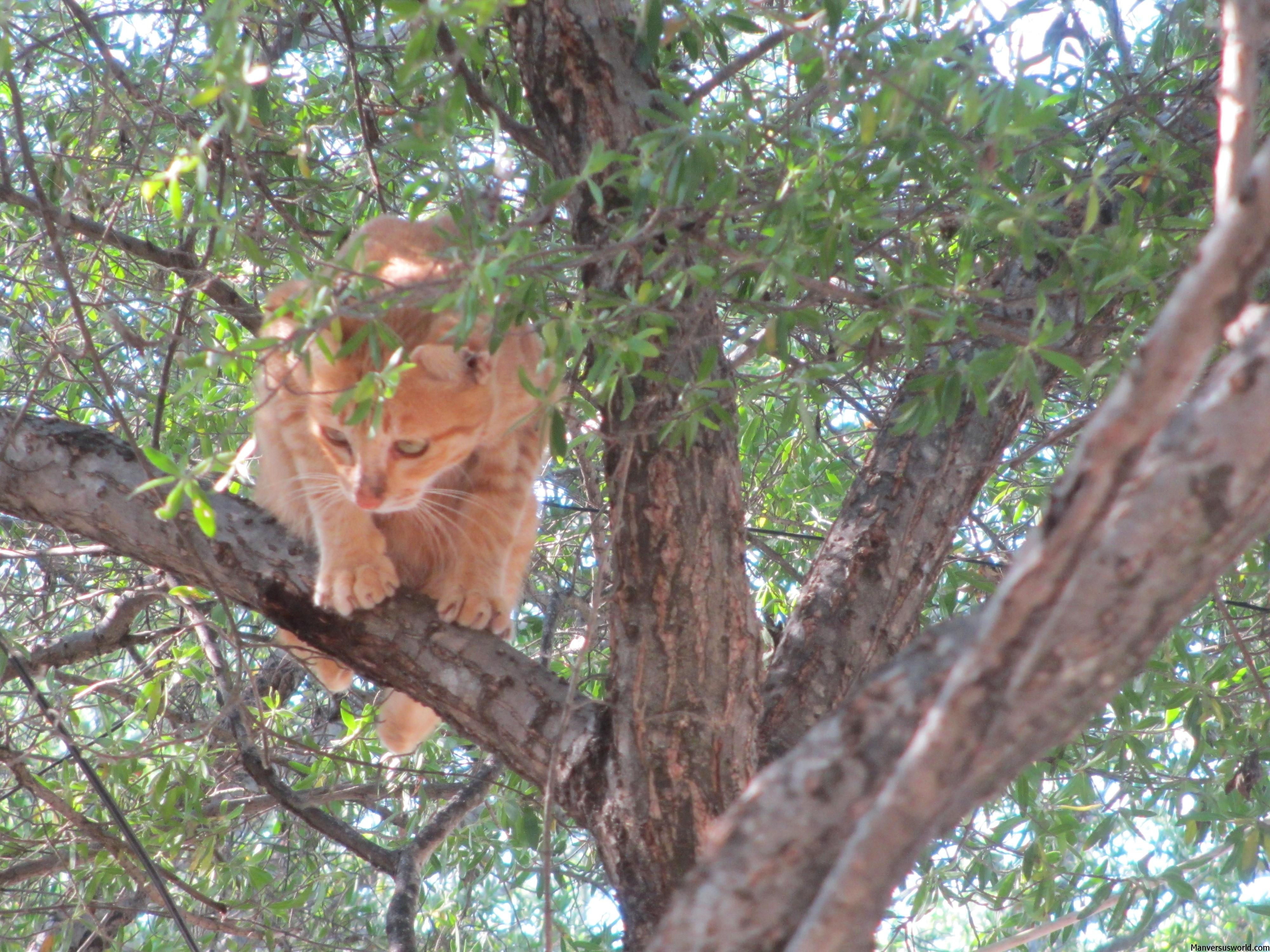 A cat up a tree in Gili Trawangan, Indonesia
